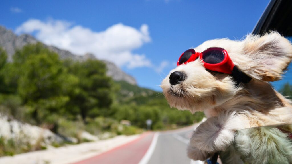 Rafraichissement canin